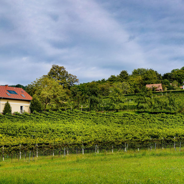 Weinlage Riedbuch