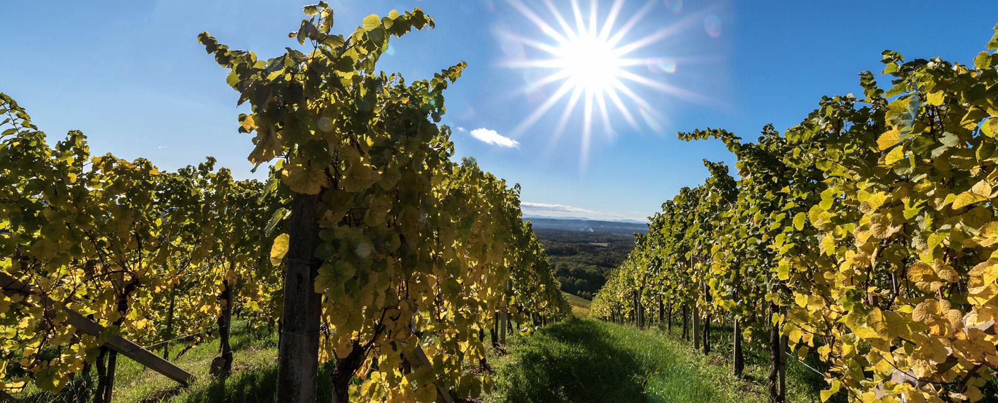 Wein in optimalen Lagen
